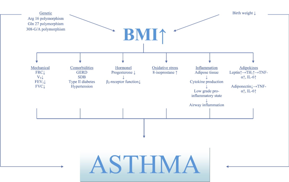 BMI and Asthma