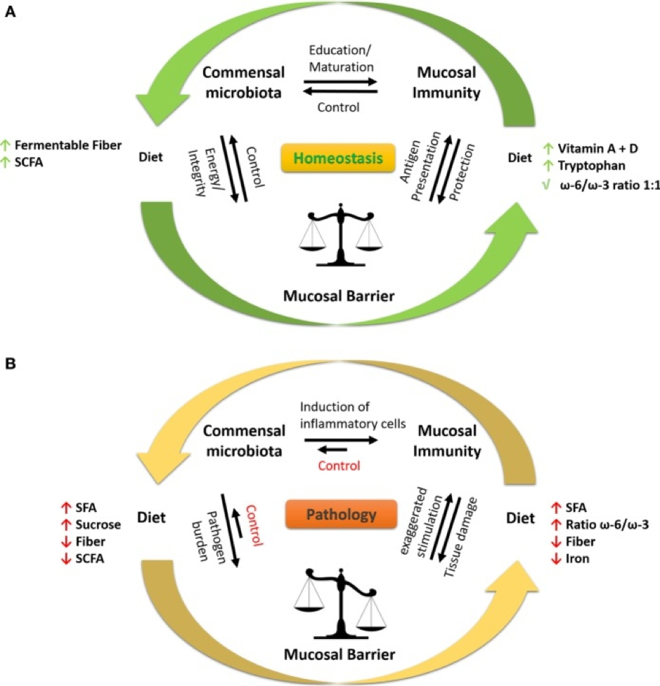 The relationship between diet, commensal microbiota and the mucosal immunity