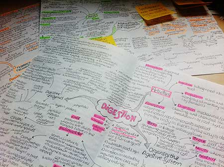 can an essay have diagrams